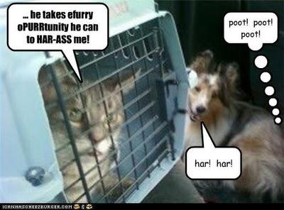 Cats!!!! Geeze!!! (1/4)