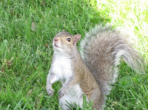 Squirrely Sunday, I Have A Bone To Pick With You Mom! (3/5)