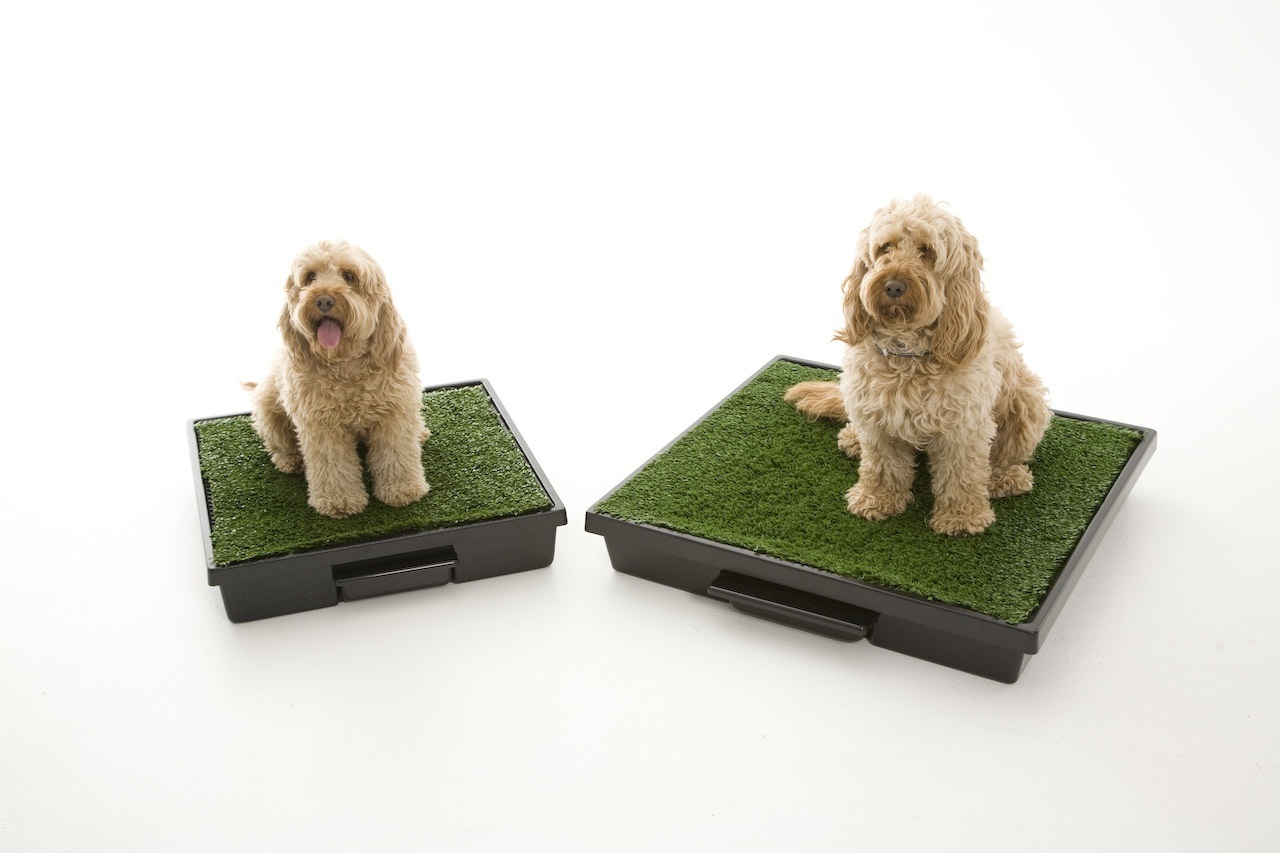 Meet The Pet Loo A Guest Blog By Tobi Skovron Ceo And