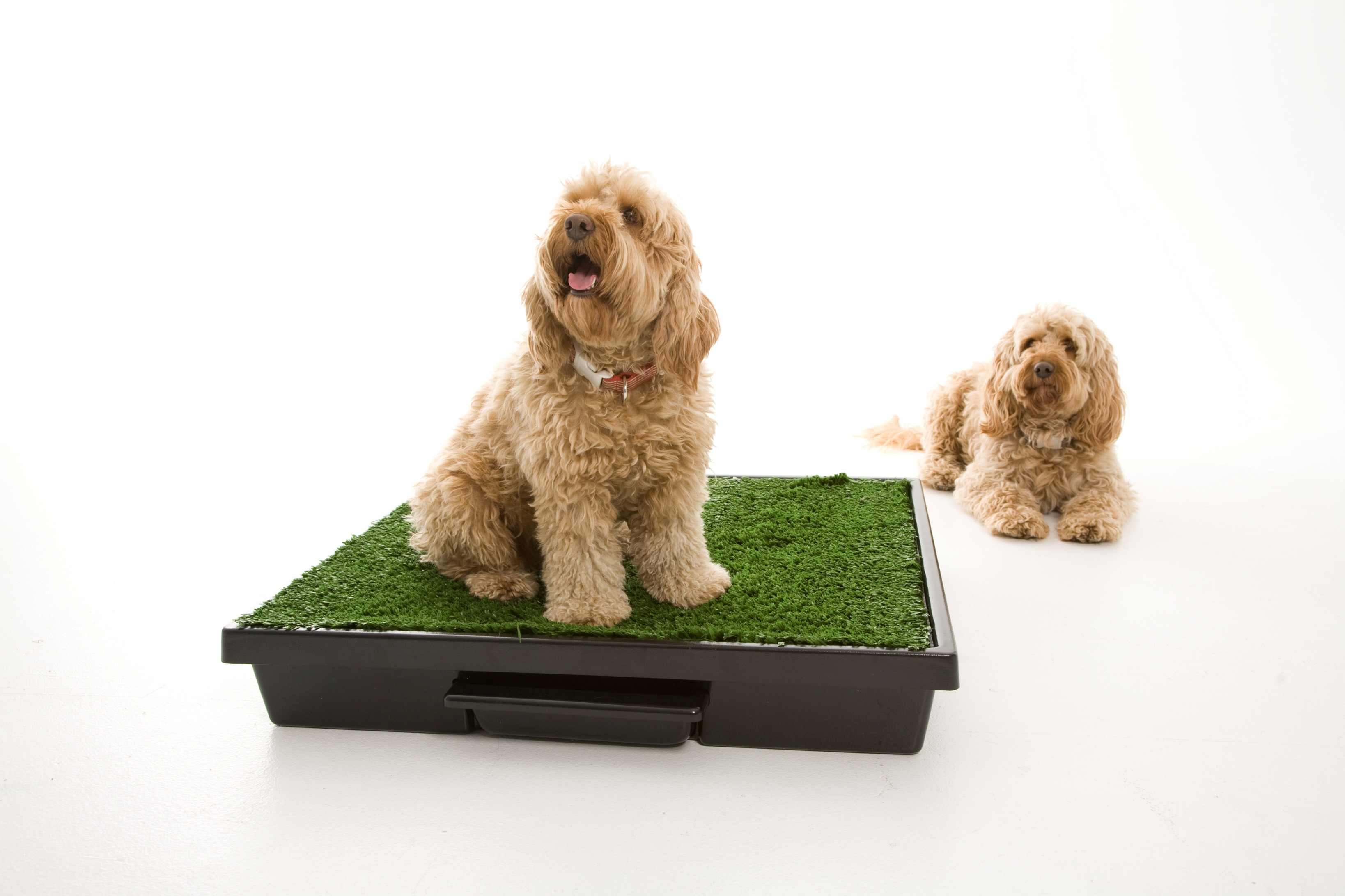 Apartment Dogs Potty Apartments Amusing Kitchen Area fy Small