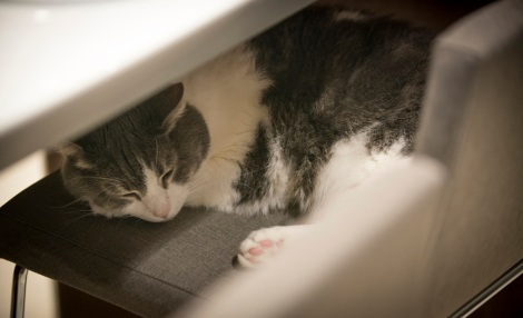 """""""Ava Kitty"""" from the Meet Purina Blogging Summit. Photo taken by Purina"""
