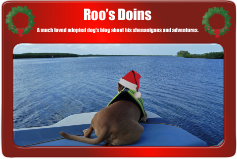 Photo Courtesy of Roo's Doins, click photo to visit his blog!