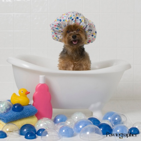 """Life is Pawfect...when there's bubbles between your toes!"" Photo Courtesy of Robert Semrow, The Pawtographer"