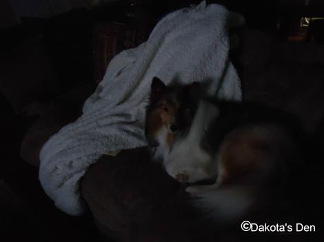 dakota night cam 2013