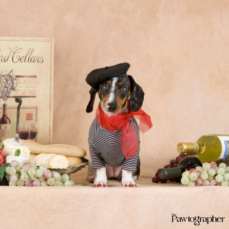"""Life is Pawfect...when your vintage exceeds expectations!"" Photo Courtesy of Robert Semrow, ""The Pawtographer"""