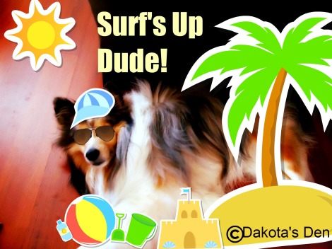 dakota surfs up