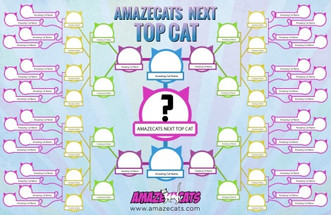amaze cats next top cat grid