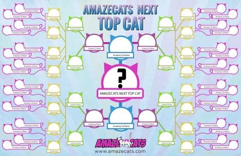 amaze cats next top cat grid