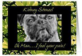 kidney stone dog funny