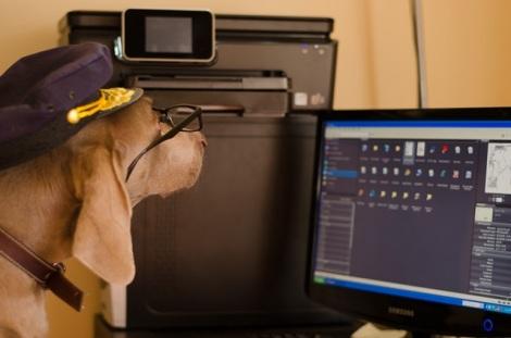 Pup Protector dog looking at computer
