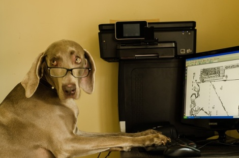 Pup Protector dog typing
