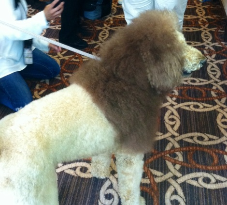 BlogPaws 2013 Dude looks like a lion