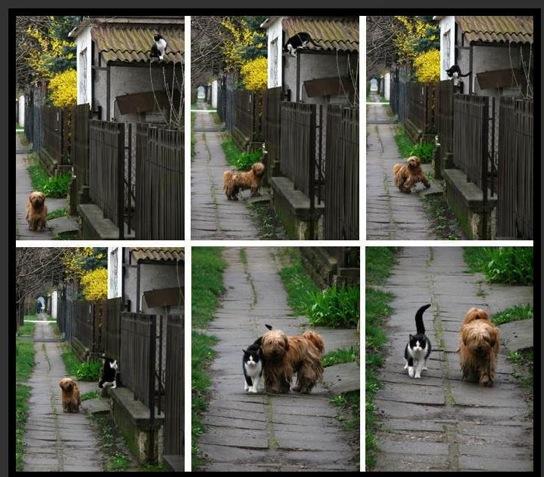 Dog and Cat Buddies!