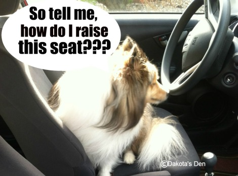 dakota driving 2