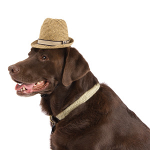 Tommy Bahama® comes to  PetSmart® !! Put your paws up and relax in style! (4/5)