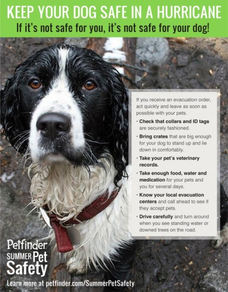 To visit PetFinder click on Infographic
