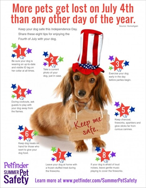 july-4-dog-632x817